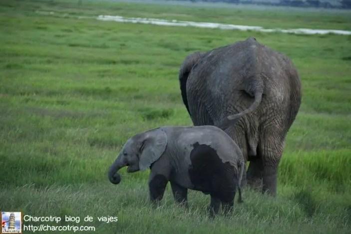 familia-elefante1