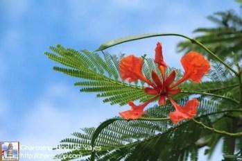 flores-panama-3