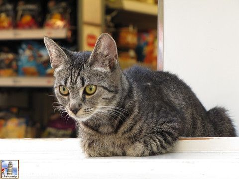 Otro gatito :)