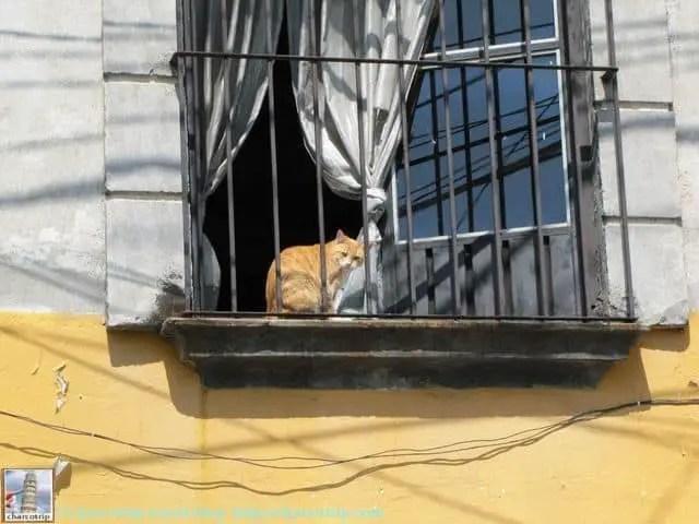 En el camino vimos este lindo gatito