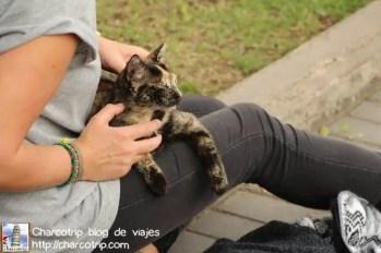 Gato dando amor