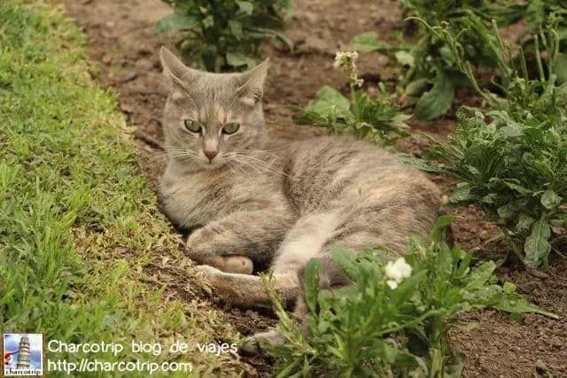 Gato de revista gatuna :D