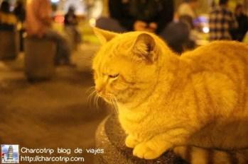Un gato posando en la noche