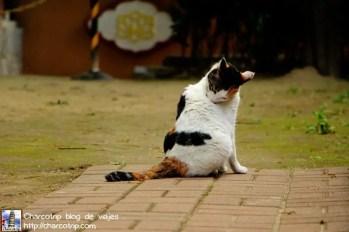 gato-suwon