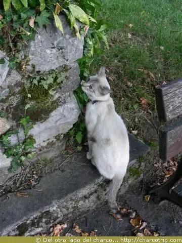 Gato atento
