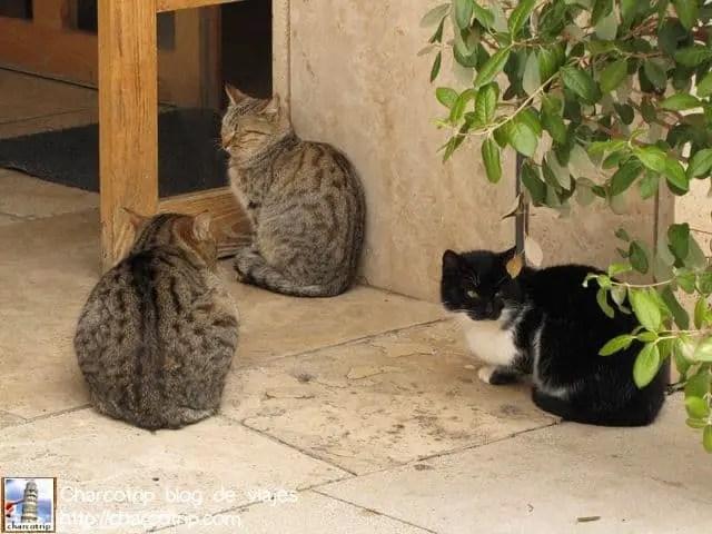 Y aquí mas guías XD estos descansan en la sección del museo (afuera del museo, no adentro)... los gatos abundan por todas partes :)