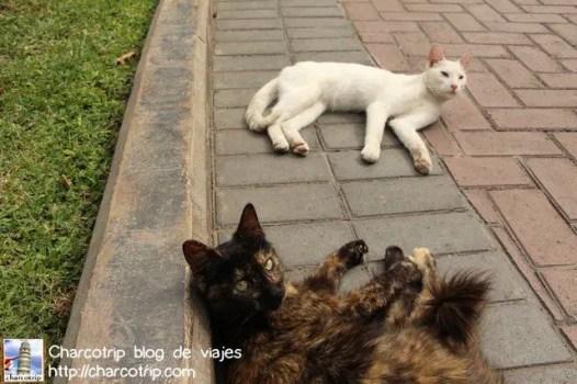 Hola gatos!
