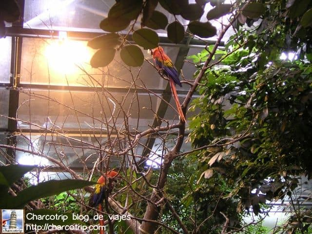 guacamayas-biodome