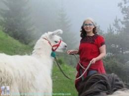 lamas-miradou-princesa-yyo