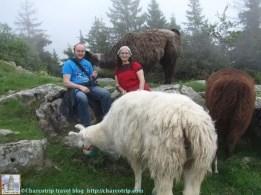 lamas-miradou-sentados-con-llamas