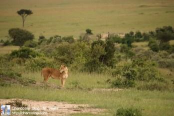 leonas-masai-mara4