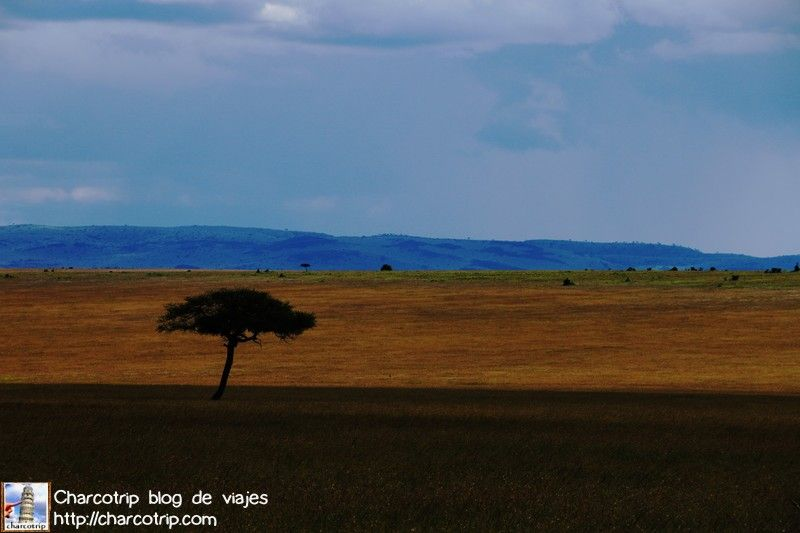 paisaje-masai-mara