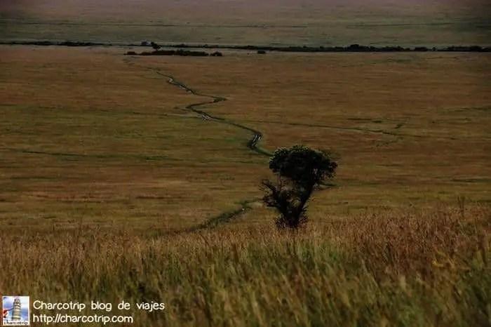 paisaje1-masai-mara
