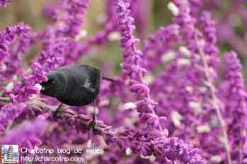Pajarito comiendo en las flores
