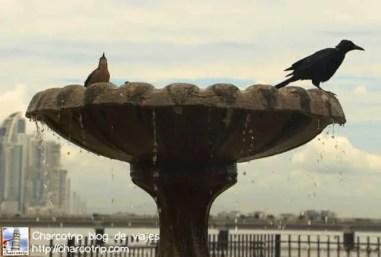 Aves dándose un chapuzon