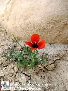 Florecitas que tímidamente crecían entre las ruinas