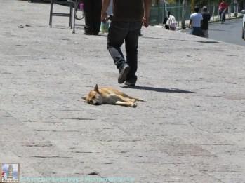 Perrito durmiendo