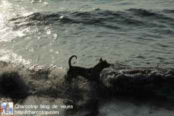 perrito-huanchaco
