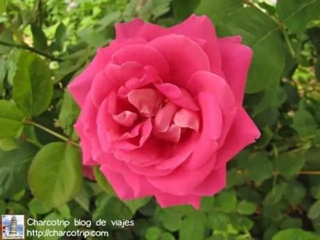 shiraz karim khan flores