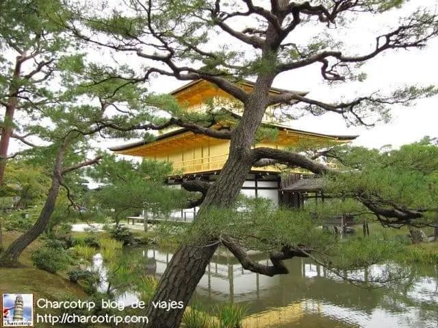 templo-dorado-arbol