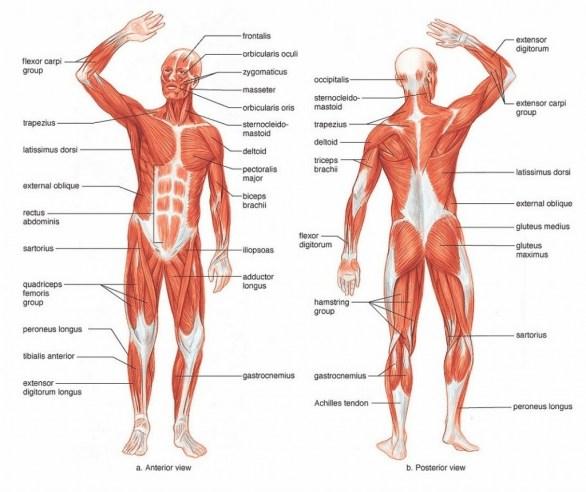 Upper body strength – what of it? – Charissa Fermelis