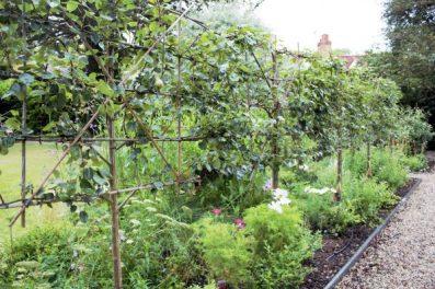 espaliered trees in Karen Kenney of Indigo Rye's garden. Charis White blo