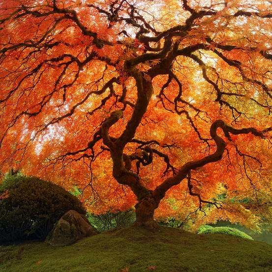 fall-tree-nature-orange-leaves-autumn-leaves-fallt-ree-via-pinterest
