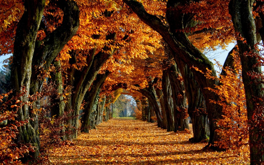 finding your path fall