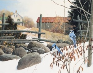christmas-greeting-card-bluejays-in-early-winter-by-dr-laird.jpg