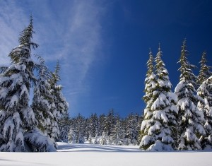 christmas-greeting-card-cold-forest-ice-1