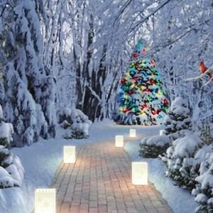 christmas-greeting-card-lighting-way-by-alan-giana.jpg
