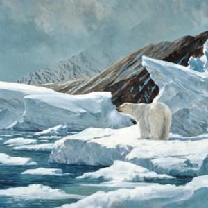 christmas-greeting-card-snow-bear-by-dr-laird.jpg