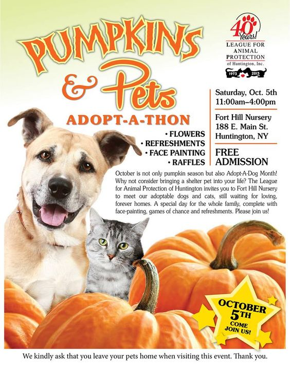 Humane Society Animals For Adoption
