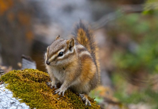 confessions-of-poetry-chipmunk-on-tree