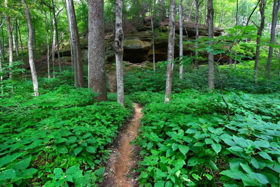 path-woods-cave