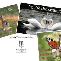 Valentine's Cards from Charlecote Park
