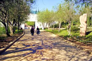 The Righteous Among the Nations Avenue, Yad Vashem, Jerusalem where Gentiles who chose to save their Jewish brethren from genocide during the Holocaust are honored.