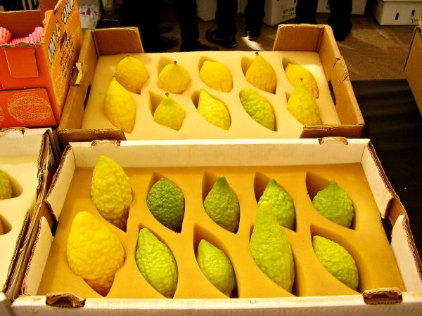 Boxed and cushioned etrog, one of the Four Kinds at the market in Bnei Brak.