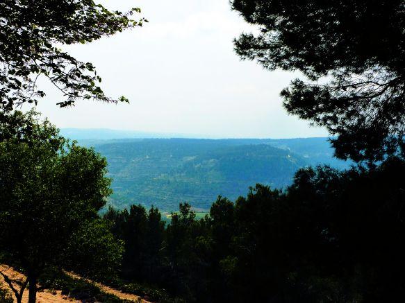 Forests Near Bethlehem. Copyright © 2010 CEMM_Tu'B'Shevat