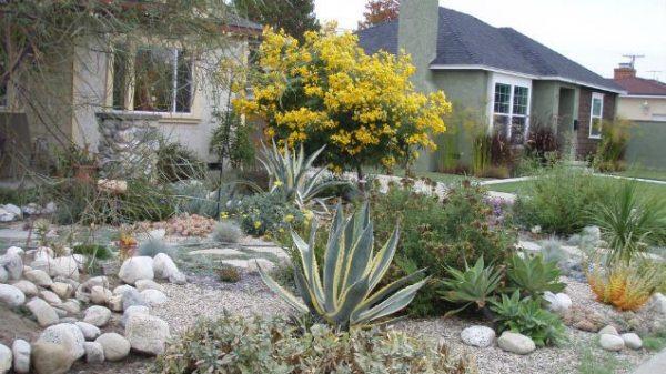 convert lawn drought-tolerant