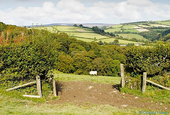 View to Burrow Wood near Winsford, Exmoor, Somerset, photographed by Charles Hawes. Walking in Exmoor.