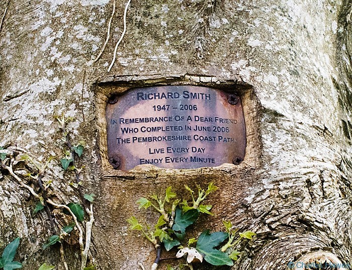 Plaque on tree to Richard Smith in wood at the end of South Beach, Tenby, Pembrokeshire, taken on the Wales Coast Path. Image by Charles Hawes.