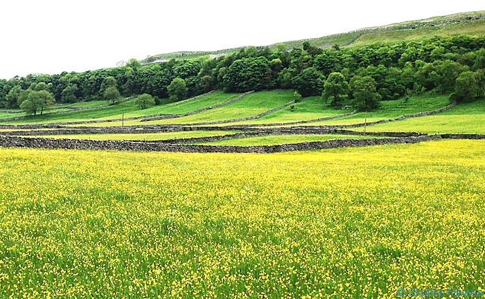 Wildflower meadow near Kettlewell, on The Dales Way, North Yorkshire, photographed by Charles Hawes