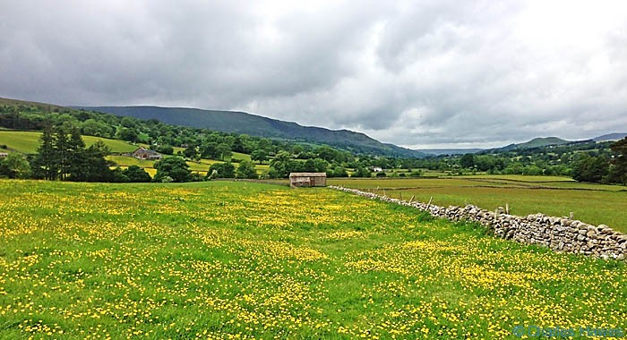 Buttercup meadow on The Dales Way near Dent, photographed by Charles Hawes