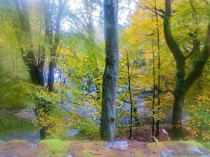 Beech woods by River Glaslyn, near Beddgelert, photographed by Charles Hawes