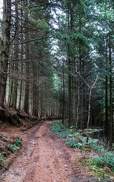 Conifer plantation in the Llyfnant Valley, Ceredigion, photographed from The wales Coast path by Charles Hawes