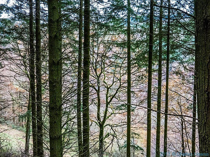 Woodland in the Llayfnant Valley, Ceredigion, photographed from The Wales Coast Path by Charles Hawes