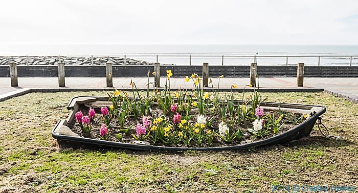 Planted up boat on the promenade at Tywyn, photographed from The Wales Coast Path by Charles Hawes