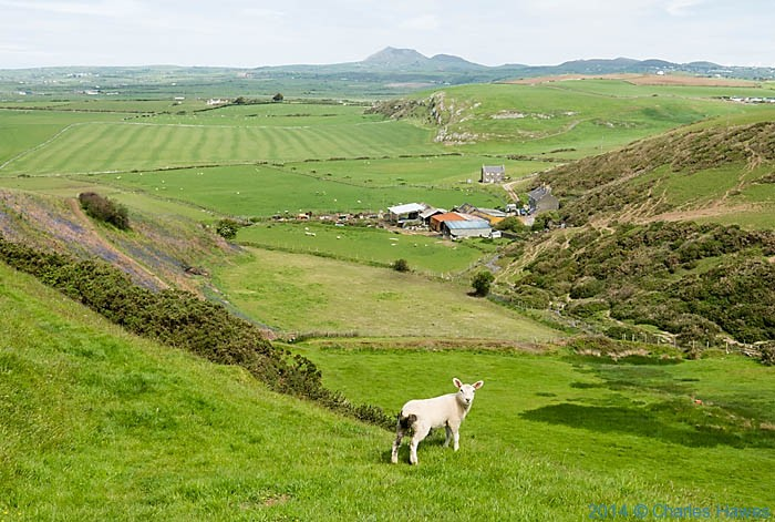 View to nant farm from the wales Coast Path near Hell's Mouth
