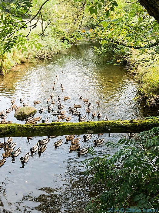 Ducks on Hoff Beck, photographed from The Dales High Way by Charles Hawes